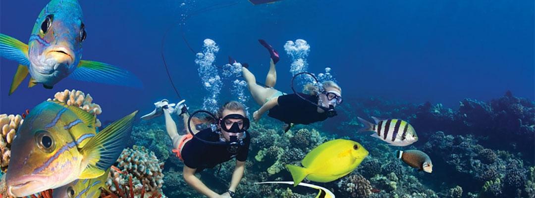 Brag Worthy Diving